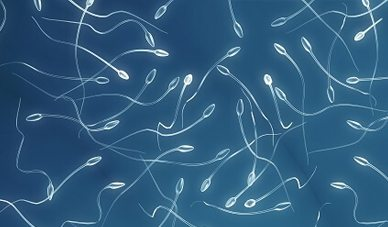 preservacion de espermatozoides