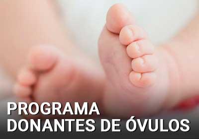 Programa donantes de óvulos